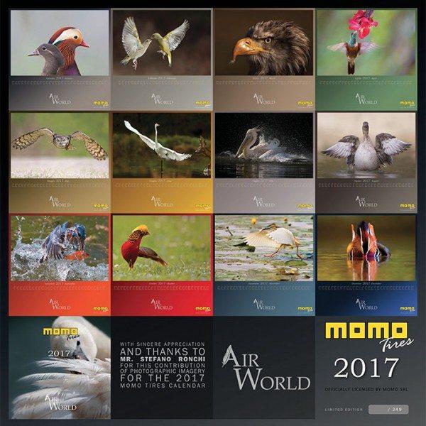 momo-birds
